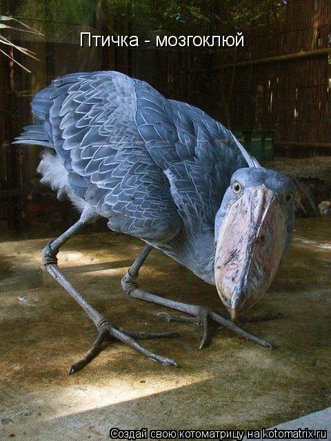 Котоматрица: Птичка - мозгоклюй