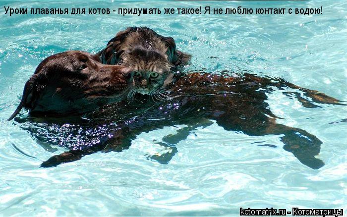 Котоматрица: Уроки плаванья для котов - придумать же такое! Я не люблю контакт с водою!