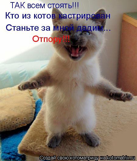 Котоматрица: ТАК всем стоять!!! Кто из котов кастрирован Станьте за мной дадим... Отпору!!!
