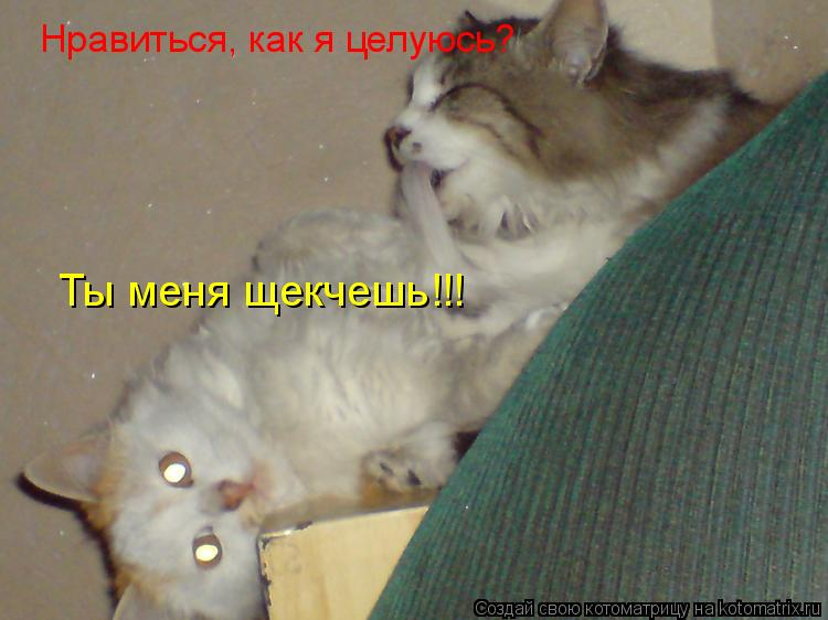Котоматрица: Нравиться, как я целуюсь? Ты меня щекчешь!!!