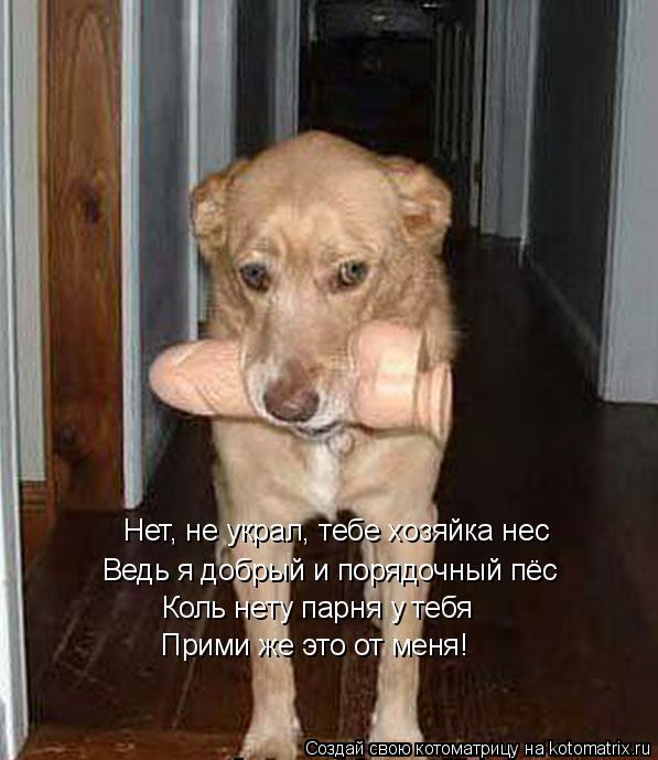 Котоматрица: Нет, не украл, тебе хозяйка нес Нет, не украл, тебе хозяйка нес Ведь я добрый и порядочный пёс Коль нету парня у тебя Прими же это от меня!