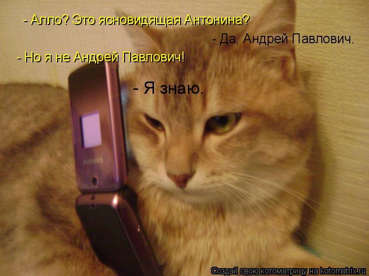Котоматрица: - Алло? Это ясновидящая Антонина? - Да, Андрей Павлович. - Но я не Андрей Павлович! - Я знаю.