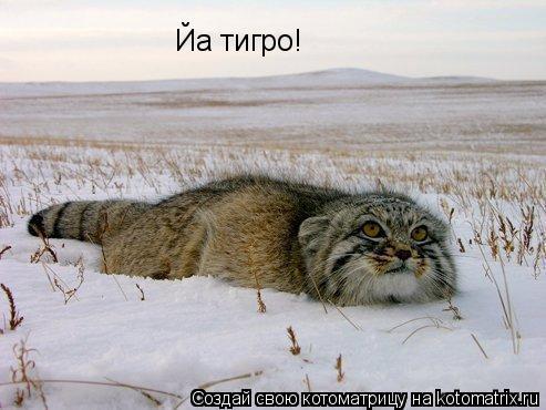 Котоматрица: Йа тигро!