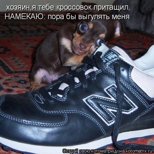 Котоматрица: хозяин,я тебе кроссовок притащил, НАМЕКАЮ: пора бы выгулять меня