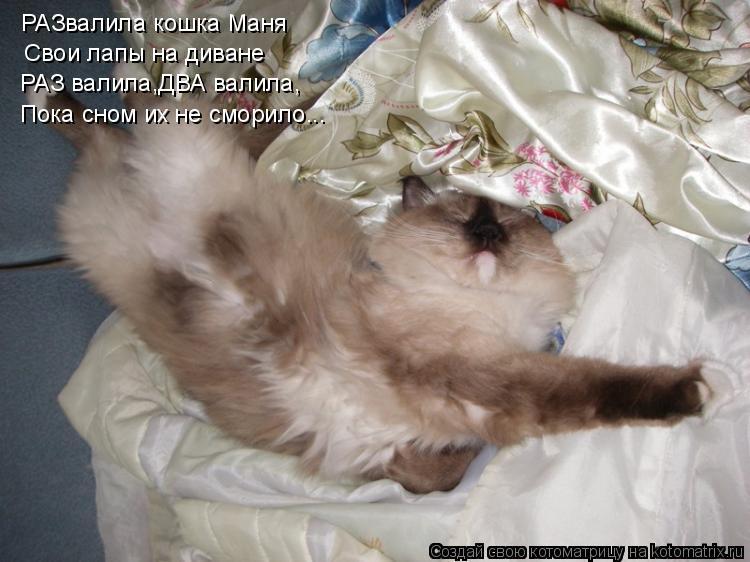Котоматрица: РАЗвалила кошка Маня Свои лапы на диване РАЗ валила,ДВА валила, Пока сном их не сморило...