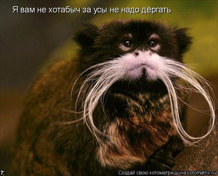 Котоматрица: Я вам не хотабыч за усы не надо дёргать