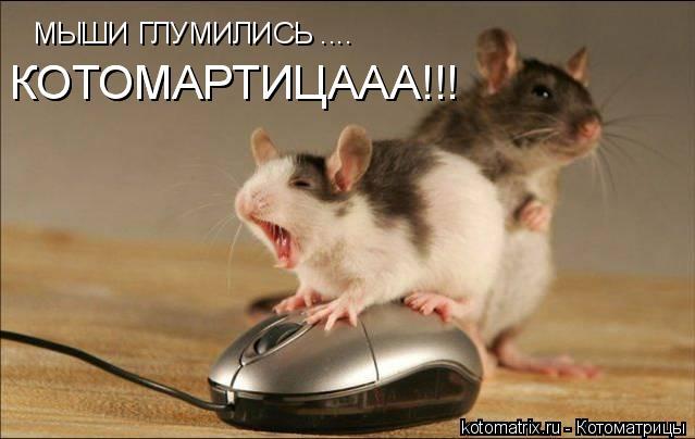 Котоматрица: МЫШИ ГЛУМИЛИСЬ .... КОТОМАРТИЦААА!!! КОТОМАРТИЦААА!!!