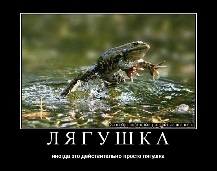 Котоматрица: лягушка иногда это действительно просто лягушка