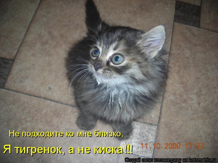 Котоматрица: Не подходите ко мне близко, Я тигренок, а не киска!!!