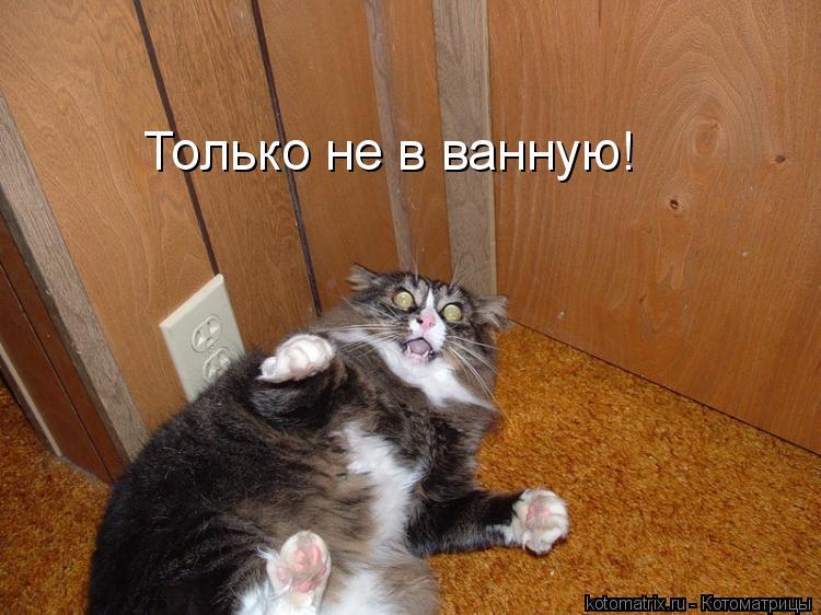 Котоматрица: Только не в ванную!