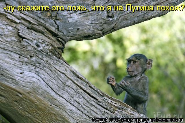 Котоматрица: -ну скажите это ложь, что я на Путина похож???