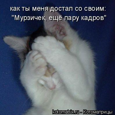 """Котоматрица: как ты меня достал со своим:  """"Мурзичек, ещё пару кадров"""""""