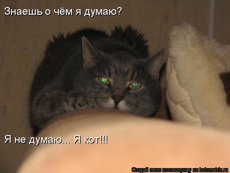 Котоматрица: Знаешь о чём я думаю? Я не думаю... Я кот!!!