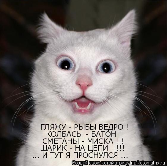 Котоматрица: ... И ТУТ Я ПРОСНУЛСЯ ...  ШАРИК - НА ЦЕПИ !!!!!  СМЕТАНЫ - МИСКА !!!  КОЛБАСЫ - БАТОН !! ГЛЯЖУ - РЫБЫ ВЕДРО !