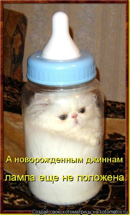 Котоматрица: лампа еще не положена. А новорожденным джиннам