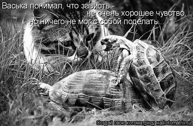 Котоматрица: Васька понимал, что зависть -  не очень хорошее чувство, но ничего не мог с собой поделать...
