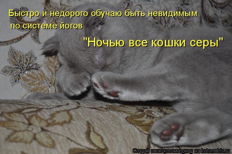"""Котоматрица: Быстро и недорого обучаю быть невидимым по системе йогов  """"Ночью все кошки серы"""""""