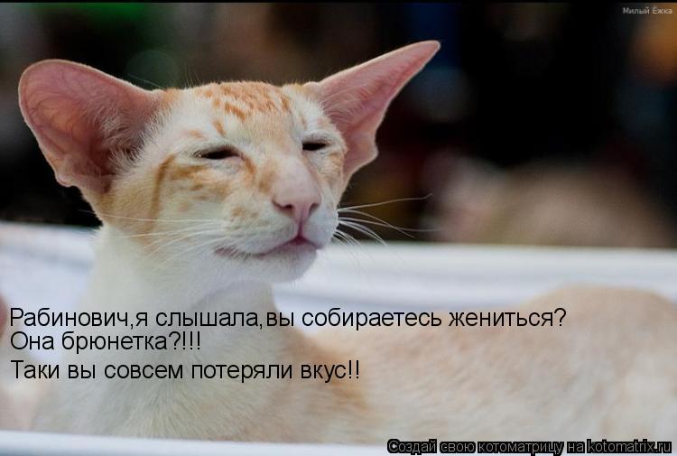 Котоматрица: Рабинович,я слышала,вы собираетесь жениться? Она брюнетка?!!! Таки вы совсем потеряли вкус!!