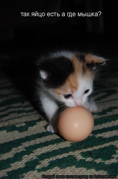 Котоматрица: так яйцо есть а где мышка?