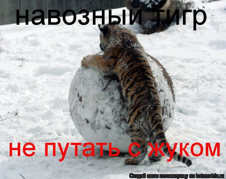 Котоматрица: навозный тигр  не путать с жуком