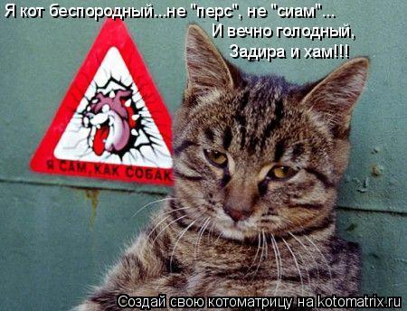 """Котоматрица: Я кот беспородный...не """"перс"""", не """"сиам""""... И вечно голодный, Задира и хам!!!"""
