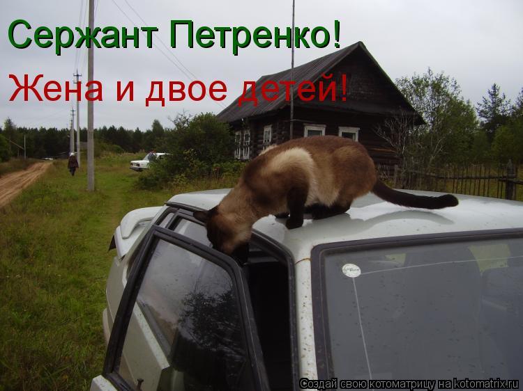 Котоматрица: Сержант Петренко! Жена и двое детей!