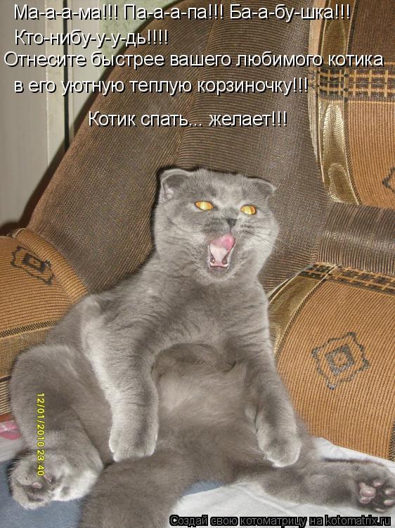 Котоматрица: Ма-а-а-ма!!! Па-а-а-па!!! Ба-а-бу-шка!!! Кто-нибу-у-у-дь!!!! Котик спать... желает!!! Отнесите быстрее вашего любимого котика в его уютную теплую корз