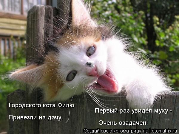 Котоматрица: Городского кота Филю Привезли на дачу. Первый раз увидел муху -  Очень озадачен!