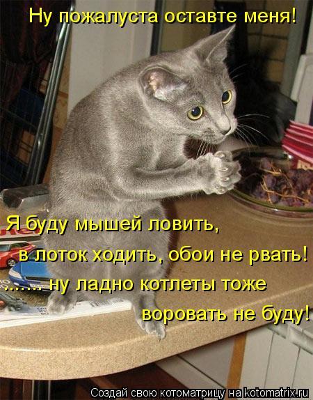 Котоматрица: Ну пожалуста оставте меня! Я буду мышей ловить,  в лоток ходить, обои не рвать! ....... ну ладно котлеты тоже  воровать не буду!