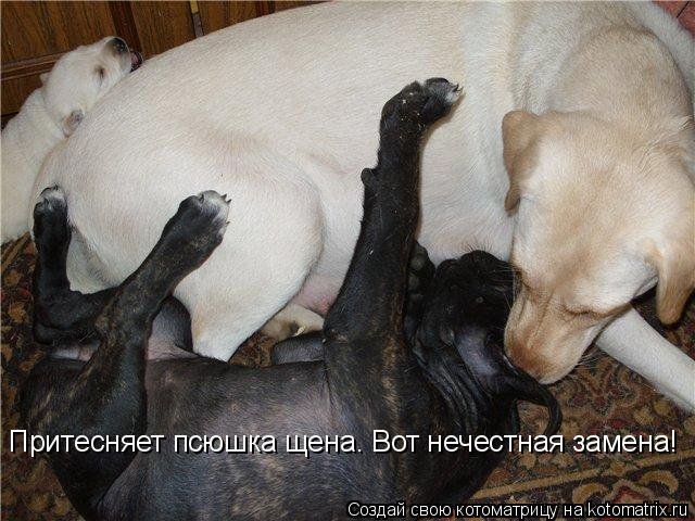 Котоматрица: Притесняет псюшка щена. Вот нечестная замена!