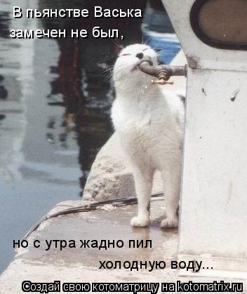 Котоматрица: В пьянстве Васька замечен не был, но с утра жадно пил холодную воду...