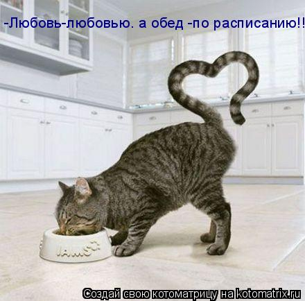 Котоматрица: -Любовь-любовью. а обед -по расписанию!!!