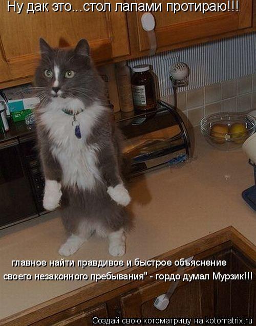 """Котоматрица: Ну дак это...стол лапами протираю!!! главное найти правдивое и быстрое объяснение своего незаконного пребывания"""" - гордо думал Мурзик!!!"""