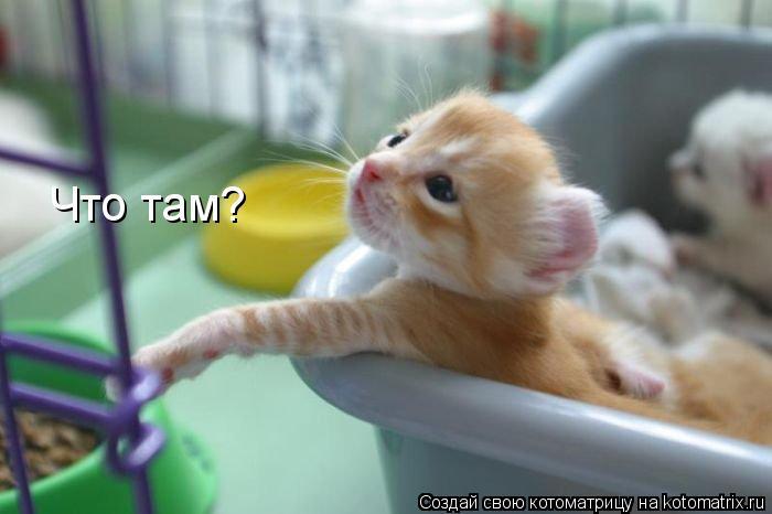 Котоматрица: Что там?