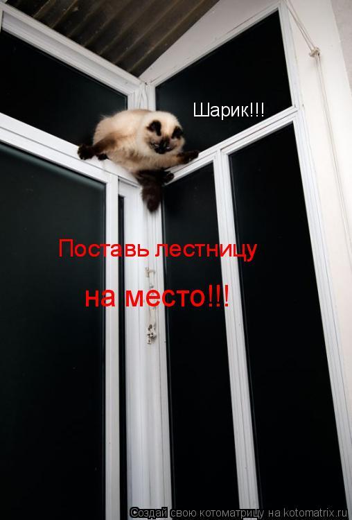 Котоматрица: Шарик!!! Поставь лестницу Поставь лестницу на место!!!