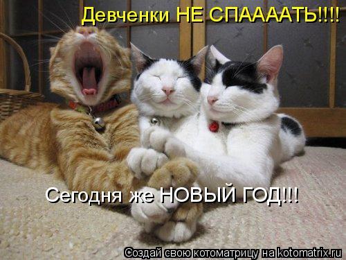 Котоматрица: Девченки НЕ СПААААТЬ!!!! Сегодня же НОВЫЙ ГОД!!!