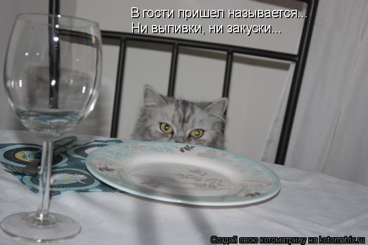 Котоматрица: В гости пришел называется... Ни выпивки, ни закуски...