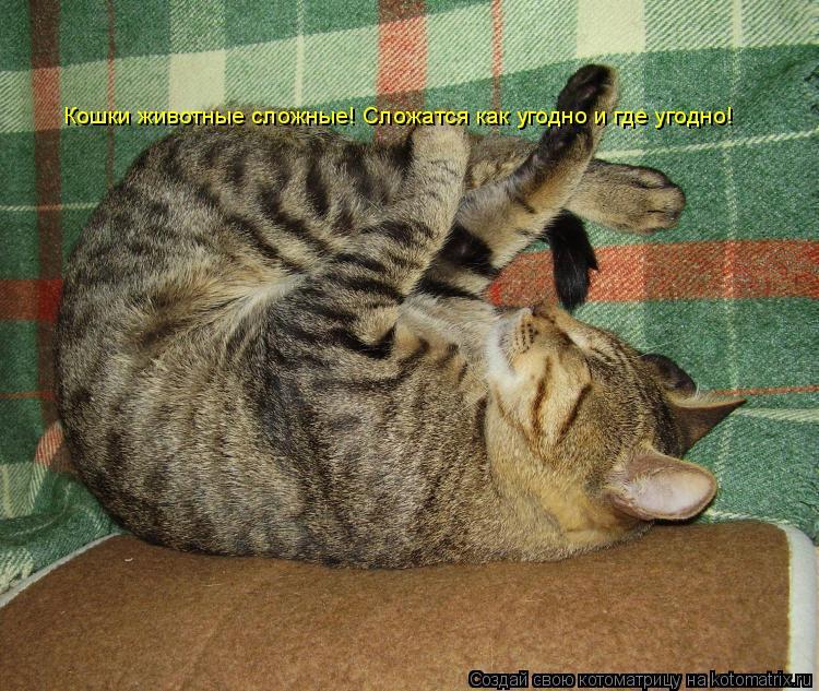 Котоматрица - Кошки животные сложные! Сложатся как угодно и где угодно!