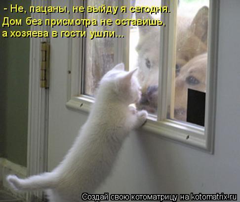 Котоматрица: - Не, пацаны, не выйду я сегодня. Дом без присмотра не оставишь, а хозяева в гости ушли...