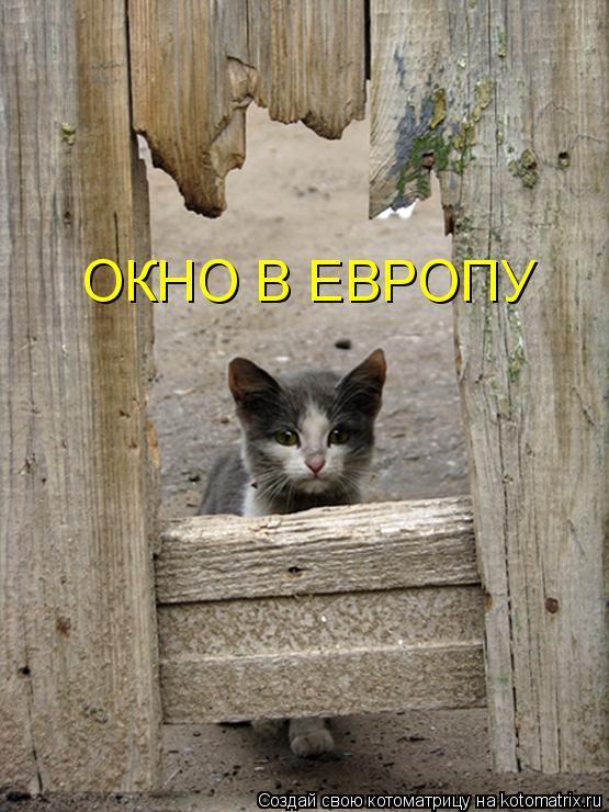 Котоматрица: ОКНО В ЕВРОПУ