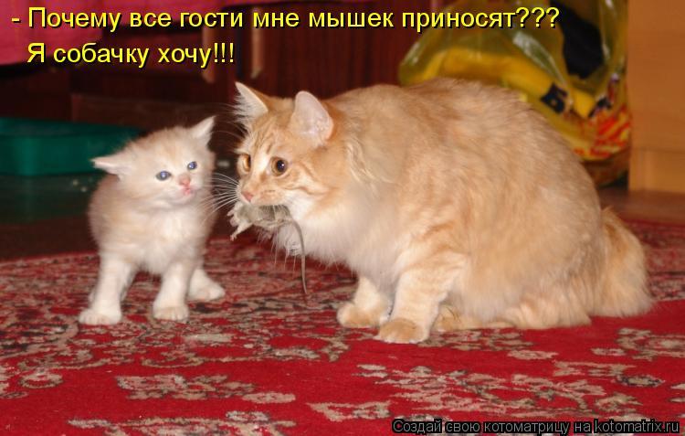 Котоматрица: - Почему все гости мне мышек приносят??? Я собачку хочу!!!
