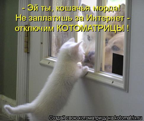 Котоматрица: - Эй ты, кошачья морда! Не заплатишь за Интернет - отключим КОТОМАТРИЦЫ !
