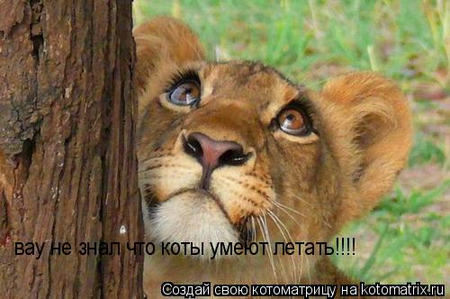 Котоматрица: вау не знал что коты умеют летать!!!!