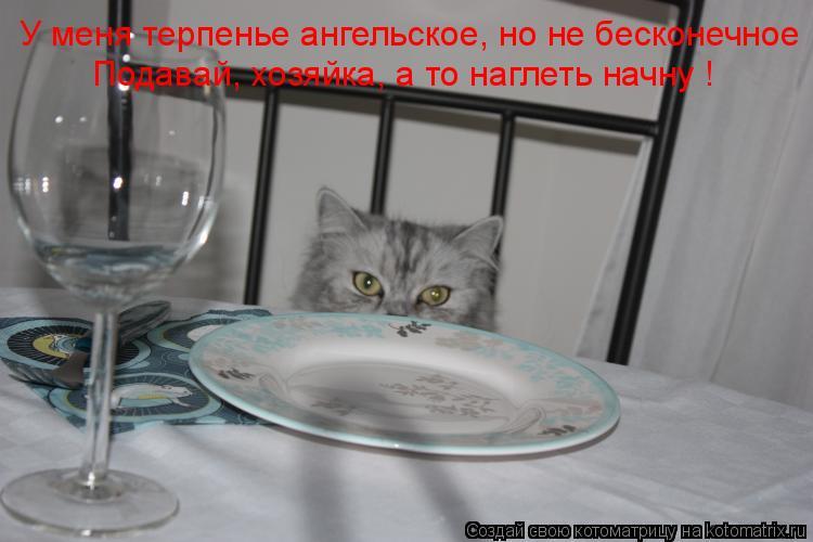 Котоматрица: У меня терпенье ангельское, но не бесконечное Подавай, хозяйка, а то наглеть начну !