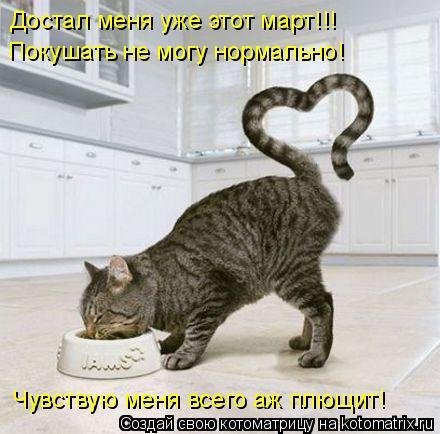 Котоматрица: Достал меня уже этот март!!!  Покушать не могу нормально!  Чувствую меня всего аж плющит!