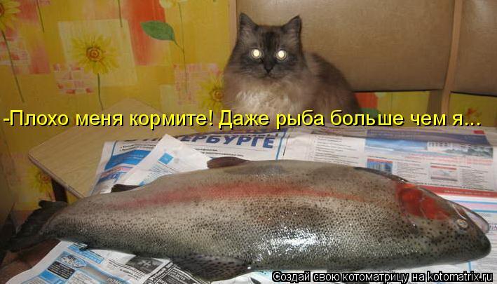 Котоматрица: -Плохо меня кормите! Даже рыба больше чем я...