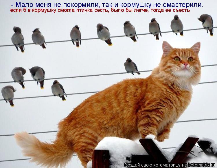 Котоматрица: - Мало меня не покормили, так и кормушку не смастерили. если б в кормушку смогла птичка сесть, было бы легче, тогда ее съесть