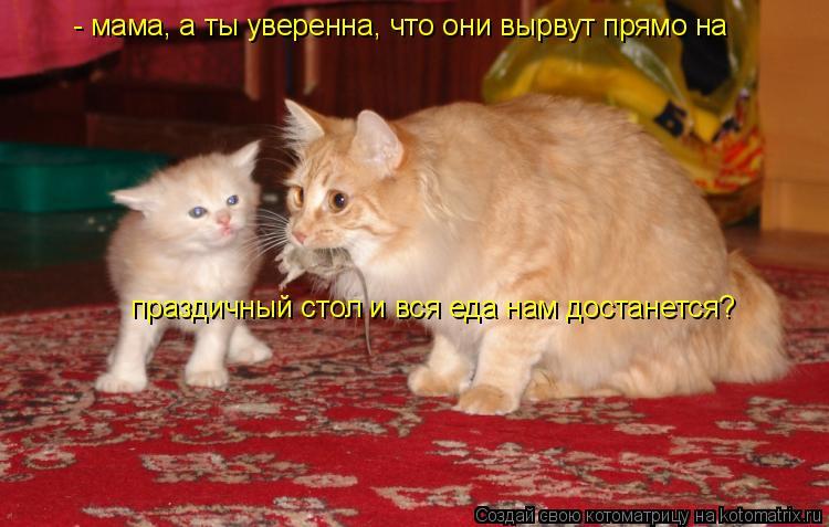 Котоматрица: - мама, а ты уверенна, что они вырвут прямо на  праздичный стол и вся еда нам достанется?