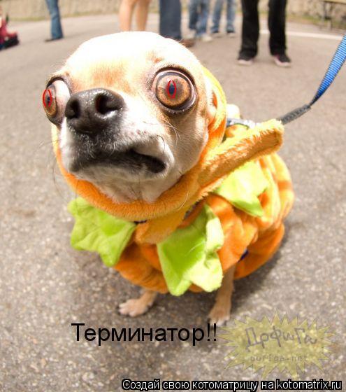 Котоматрица: () () Терминатор!!
