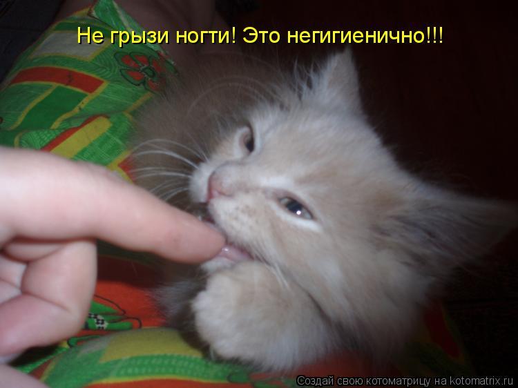 Котоматрица: Не грызи ногти! Это негигиенично!!!
